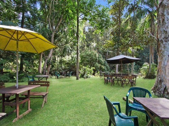 Rainforest - Accommodation NT